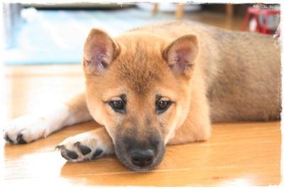 幼犬璃子は元気いっぱい_c0049950_105699.jpg