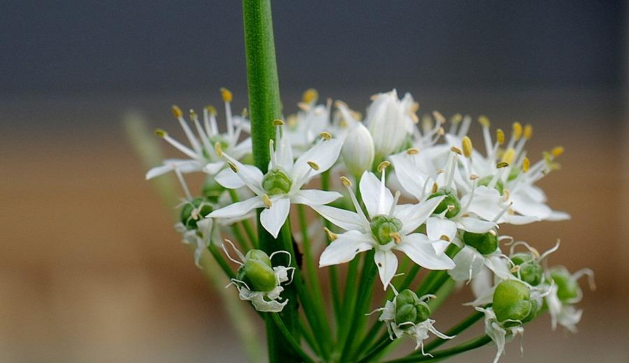 秋の土手の花々_c0187781_23542534.jpg