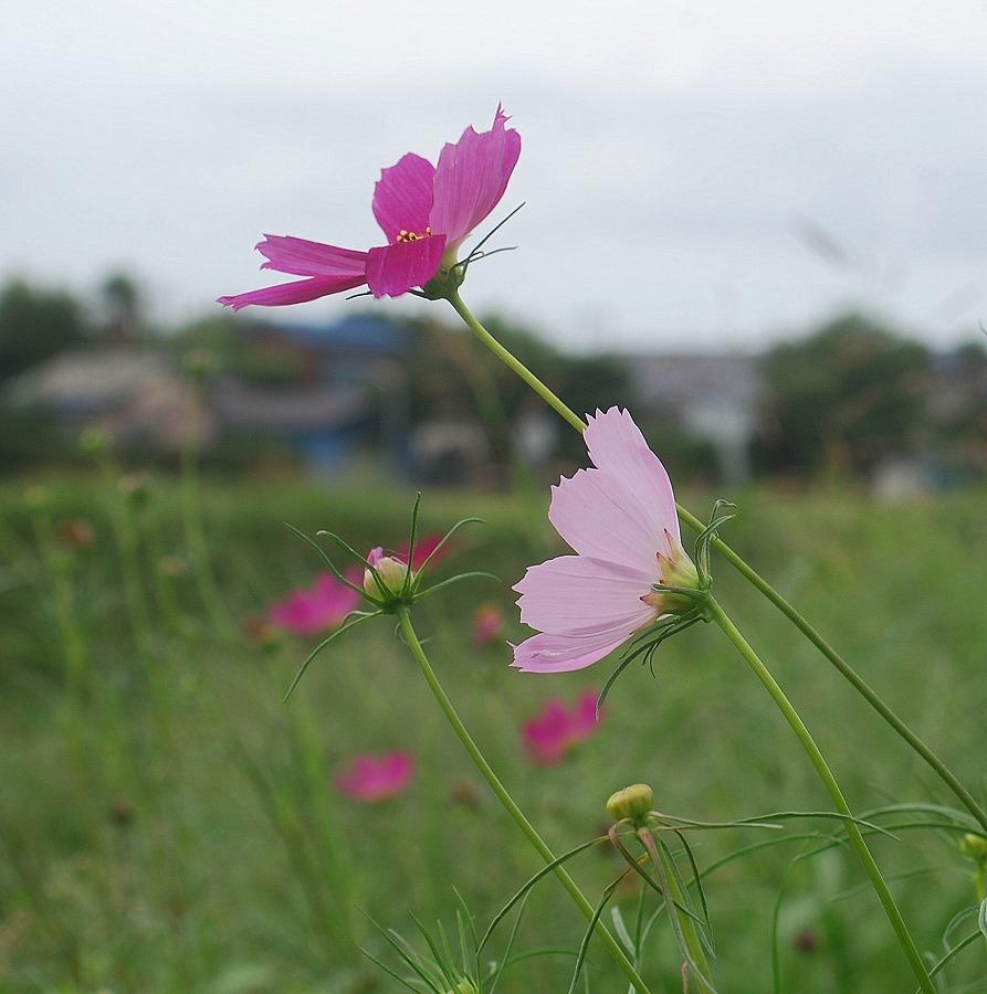 秋の土手の花々_c0187781_23551061.jpg