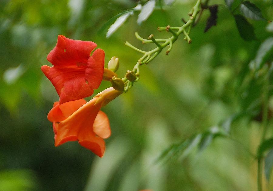 秋の土手の花々_c0187781_23554380.jpg