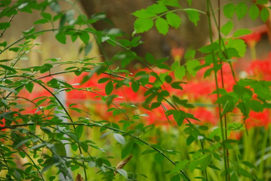 秋の土手の花々_c0187781_2356071.jpg