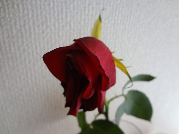 a0243305_8223658.jpg