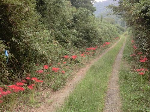 森林浴&ビオトープハイキング  by (仁べ)_e0228405_17445667.jpg