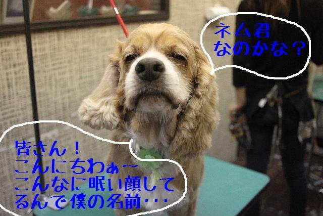 b0130018_1010392.jpg