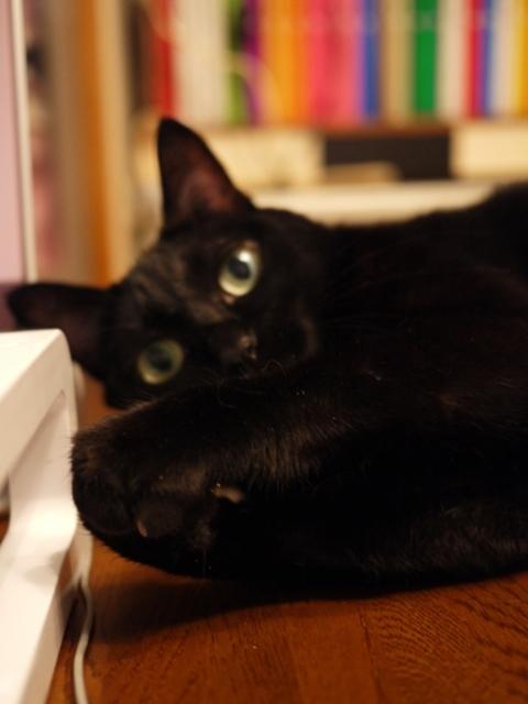 サンド猫 のぇる編。_a0143140_22185420.jpg
