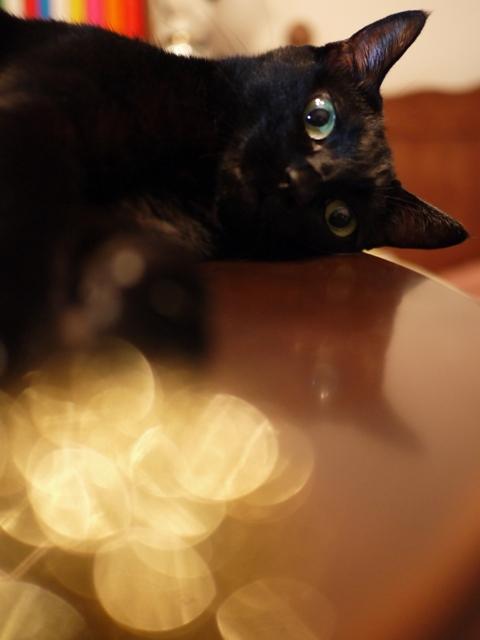 サンド猫 のぇる編。_a0143140_22235441.jpg