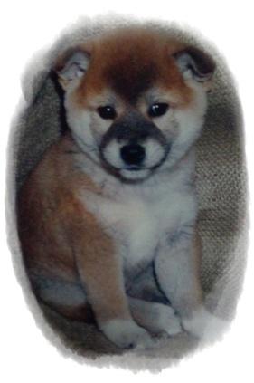 幼犬璃子は元気いっぱい_c0049950_22354544.jpg