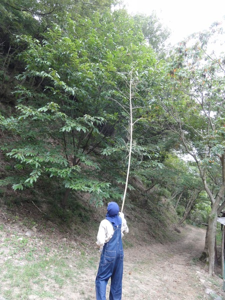 南海ハイキング⇒孝子の森を通る  by (TATE-misaki)_c0108460_19585869.jpg
