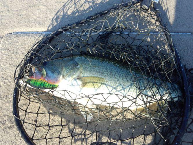釣果報告 『琵琶湖で48センチ!』 ブレードクランクM5R_d0145899_3442477.jpg