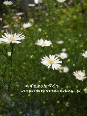 d0170109_22234647.jpg