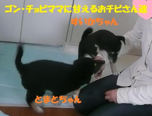 f0121712_22535710.jpg