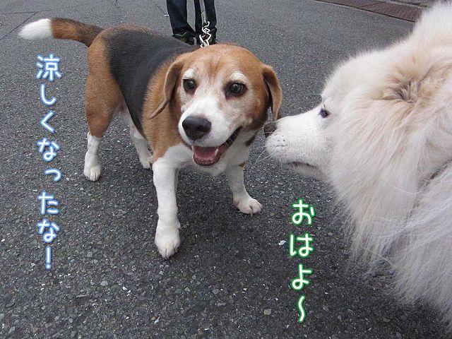 嵐の前のお散歩_c0062832_832674.jpg