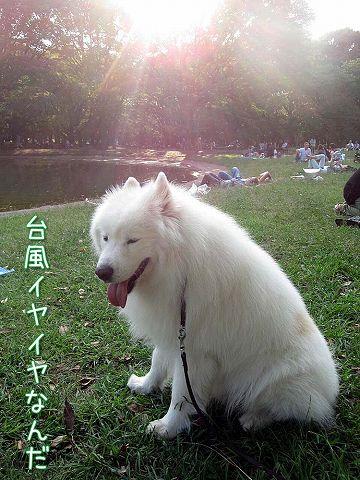 嵐の前のお散歩_c0062832_834850.jpg