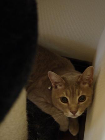猫のお友だち シナモンちゃんプーちゃんとのくん編。_a0143140_14253984.jpg