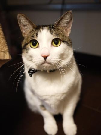 猫のお友だち シナモンちゃんプーちゃんとのくん編。_a0143140_14264441.jpg