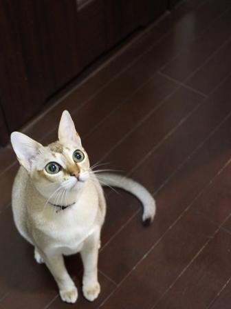 猫のお友だち シナモンちゃんプーちゃんとのくん編。_a0143140_14311323.jpg