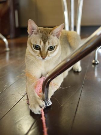 猫のお友だち シナモンちゃんプーちゃんとのくん編。_a0143140_14313296.jpg