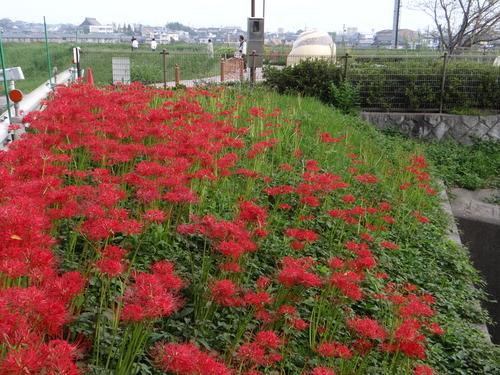 台風前のお散歩_d0254540_9543657.jpg