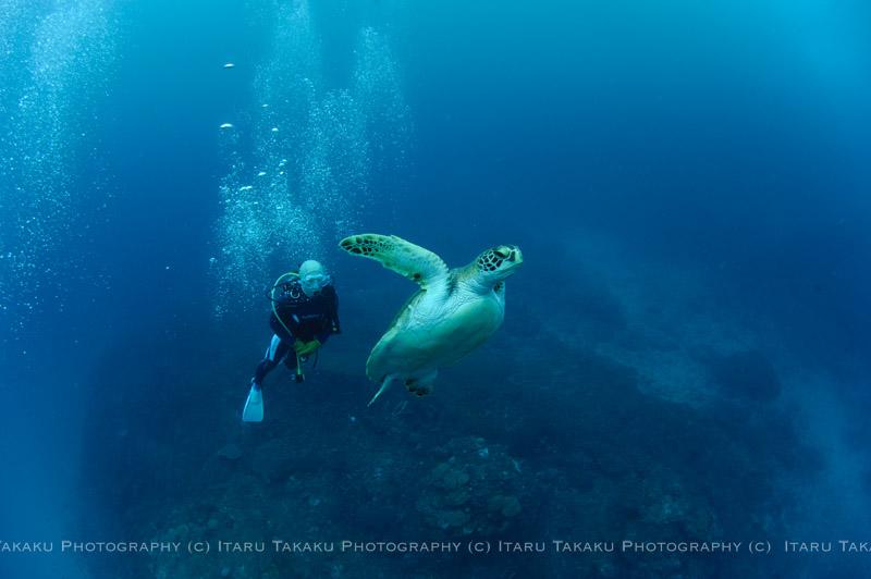 アオウミガメと一緒に!_b0186442_0102516.jpg
