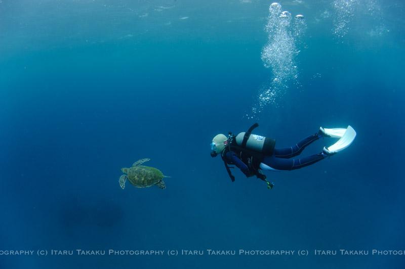 アオウミガメと一緒に!_b0186442_0104598.jpg