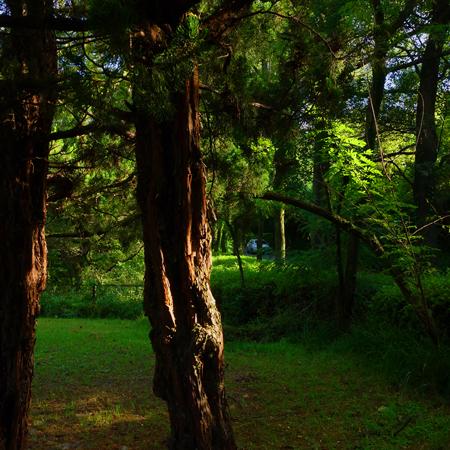 [ほぼ無関係な写真]Green of park _e0246661_102167.jpg