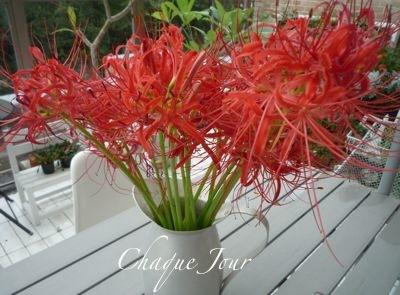 綺麗な花と夕焼け…最高だね!_d0266681_10391163.jpg