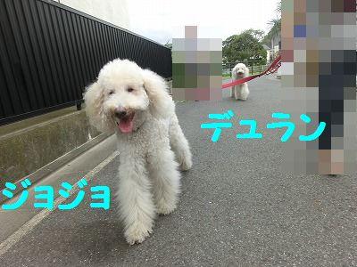 e0222588_1622955.jpg