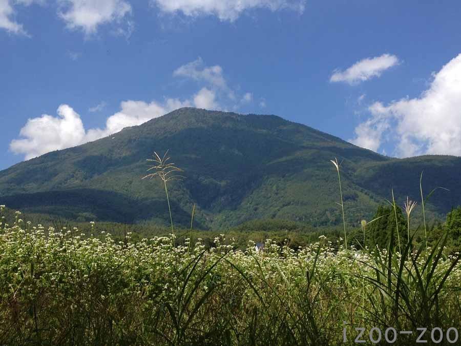 黒姫山と蕎麦の花_c0223095_1640513.jpg