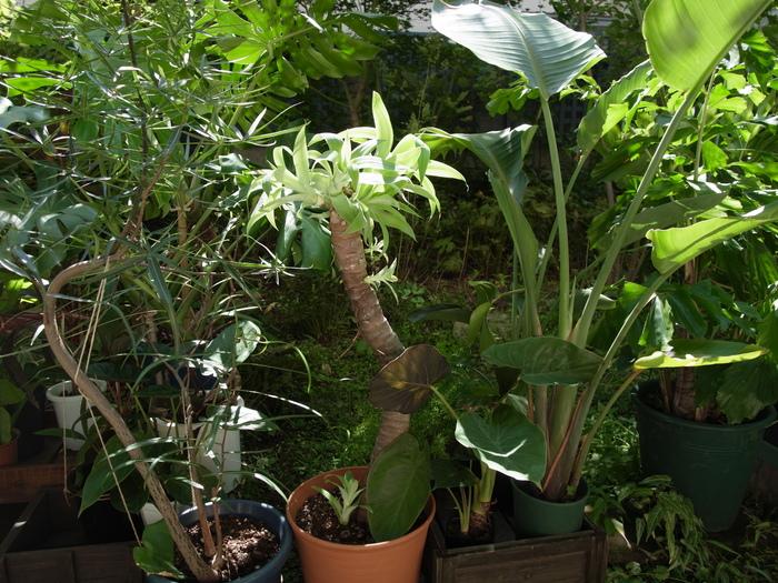 台風その後と観葉植物いろいろ_e0276411_12244755.jpg