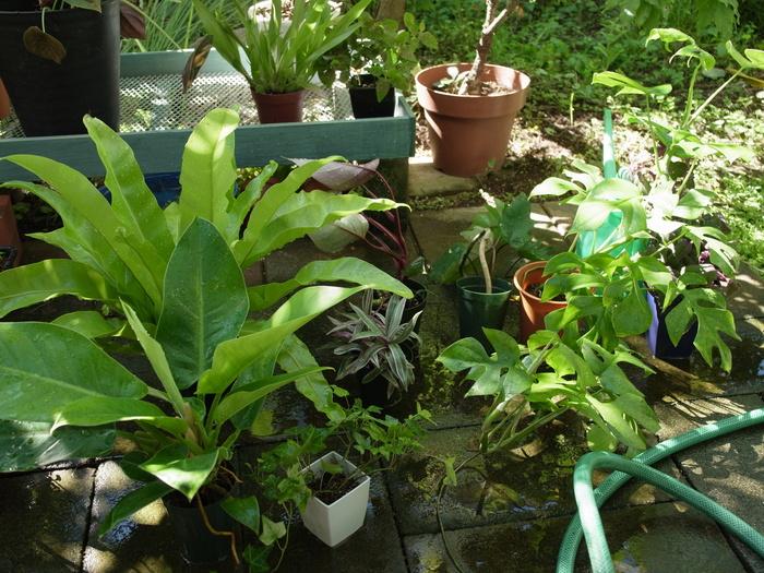 台風その後と観葉植物いろいろ_e0276411_1224929.jpg
