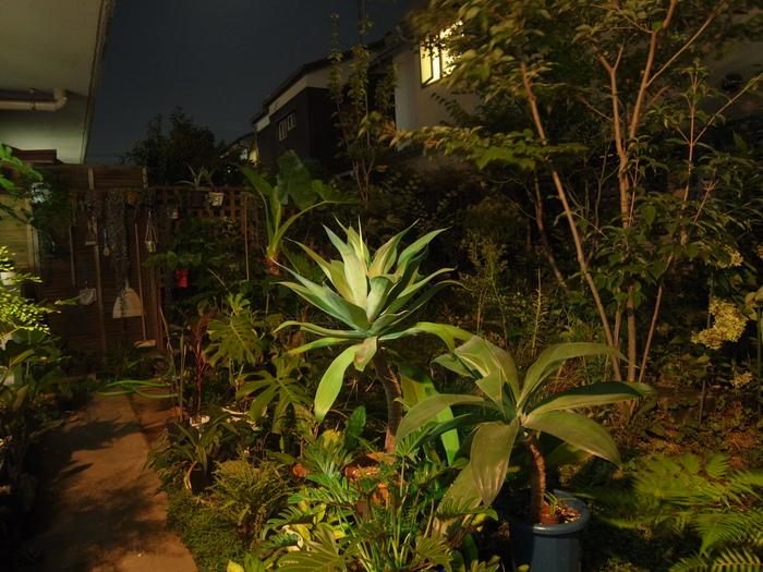 台風その後と観葉植物いろいろ_e0276411_1235437.jpg