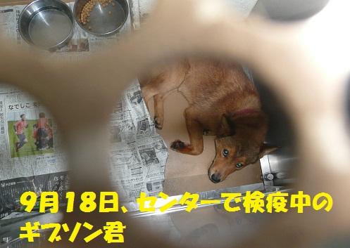 f0121712_16193195.jpg