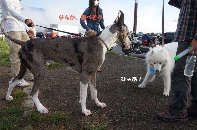 f0234023_6511496.jpg