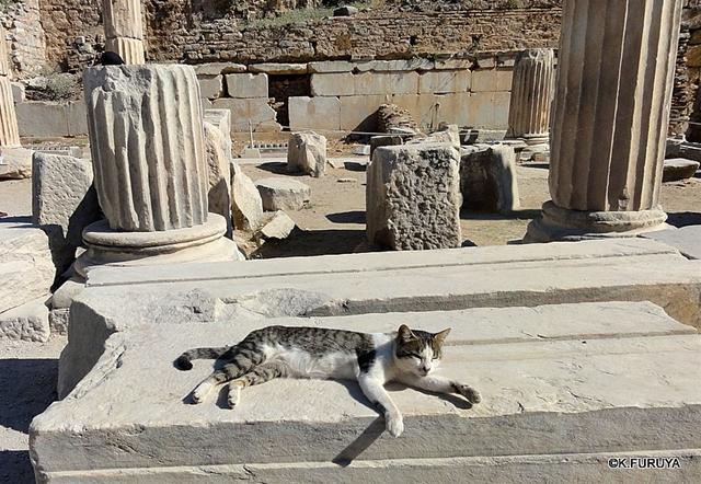 トルコ旅行記 4  古代遺跡 エフェス_a0092659_1911189.jpg