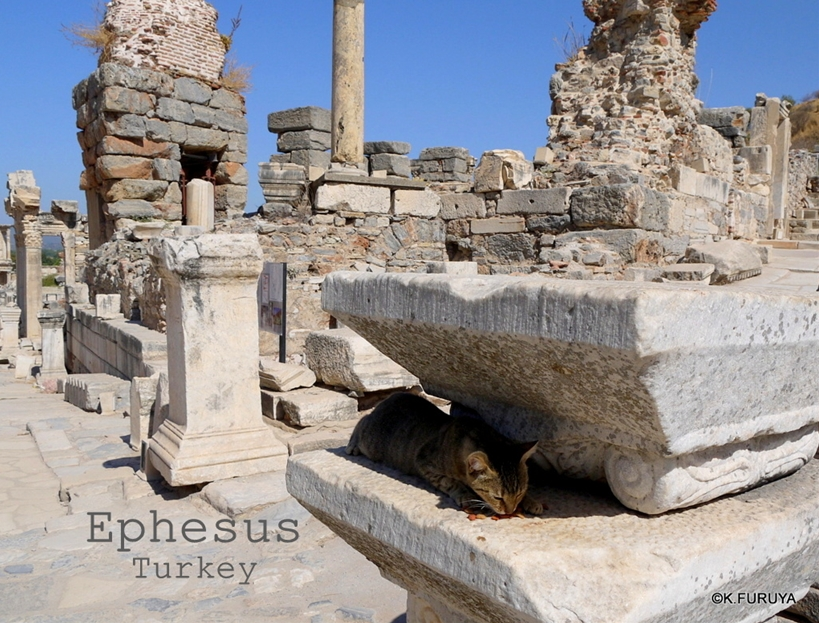 トルコ旅行記 4  古代遺跡 エフェス_a0092659_19173096.jpg