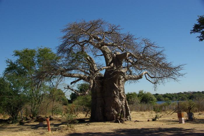 Africa-21 アフリカには見るものがいっぱい/So many to see in Africa_e0140365_20252736.jpg