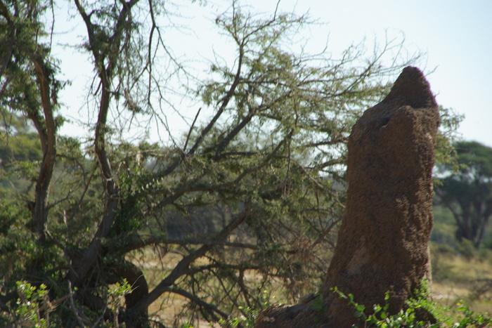 Africa-21 アフリカには見るものがいっぱい/So many to see in Africa_e0140365_20261467.jpg