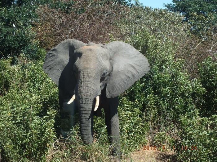 Africa-21 アフリカには見るものがいっぱい/So many to see in Africa_e0140365_20282119.jpg