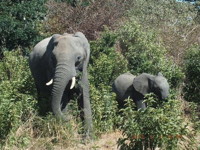 Africa-21 アフリカには見るものがいっぱい/So many to see in Africa_e0140365_20293682.jpg