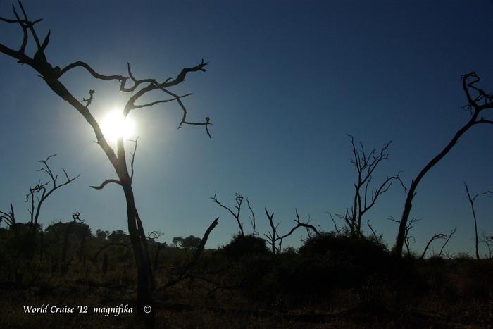Africa-21 アフリカには見るものがいっぱい/So many to see in Africa_e0140365_204657.jpg