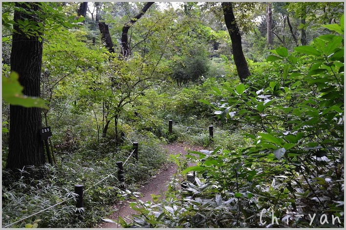 都心のオアシス 「自然教育園」_e0219011_19583687.jpg