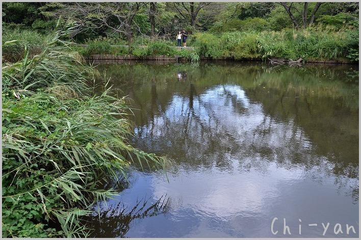都心のオアシス 「自然教育園」_e0219011_1958733.jpg