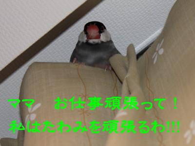 b0158061_2058630.jpg