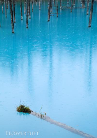 雨の青い池―北海道美瑛①_c0137872_1485043.jpg
