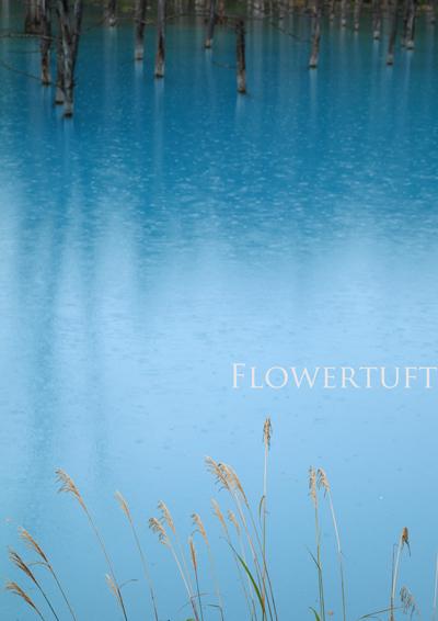 雨の青い池―北海道美瑛①_c0137872_149491.jpg