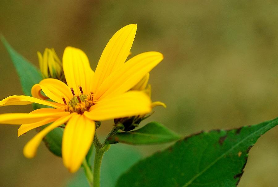 秋の土手の花々_c0187781_1918277.jpg