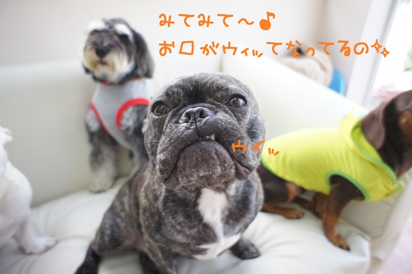 d0220513_20412880.jpg