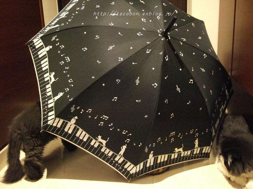 雨の日も、ネコ_f0085219_2271579.jpg