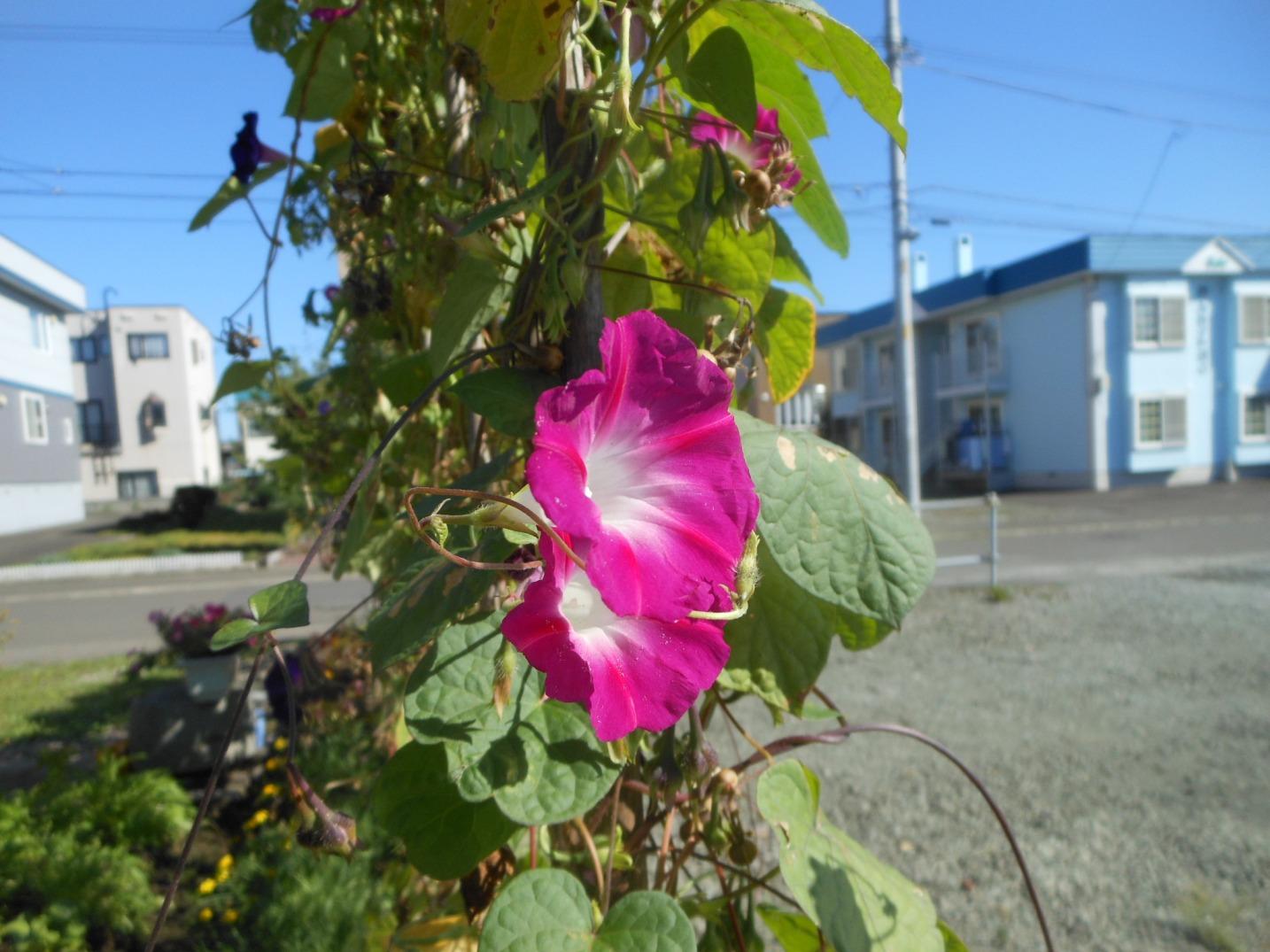 1818) 2012年10月3日~10月13日、福島県に行ってきます。_f0126829_1211372.jpg