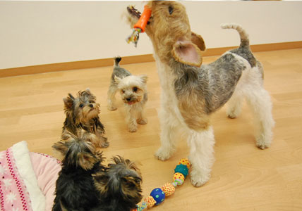 遊びた盛りの仔犬たち (*^_^*)_e0236430_22282423.jpg